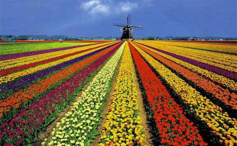 Тульская область будет сотрудничать с Голландией в вопросах растениеводства