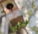 Нежные краски весны в Туле