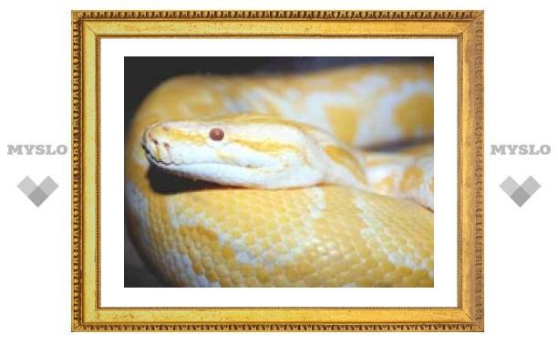 Змея в тульской квартире
