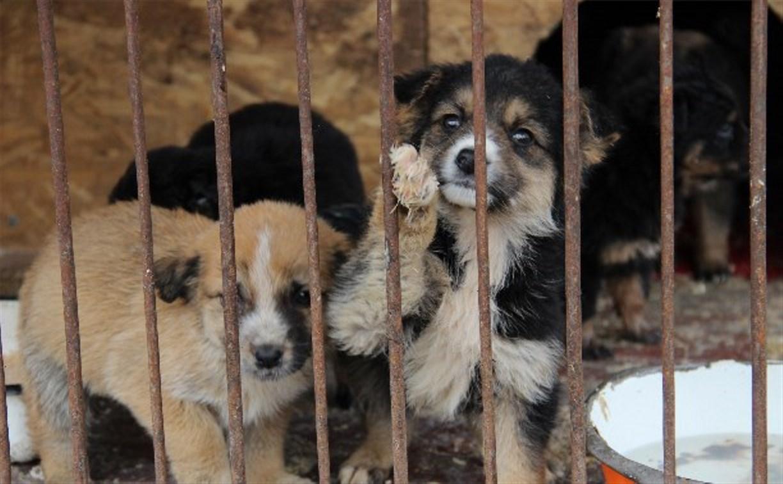 Центр помощи бездомным животным «Любимец» приглашает туляков на субботник