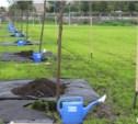 В Туле определят места проведении акции «Дай жизнь дереву»