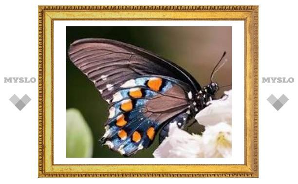 Тульские бабочки упорхнули в Питер