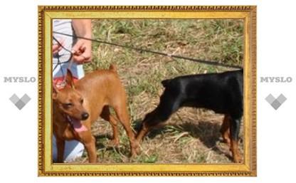 В Туле побывали лучшие собаки России
