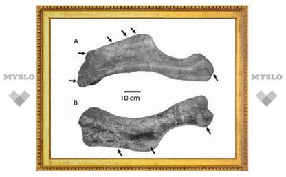 Тираннозавров признали падальщиками