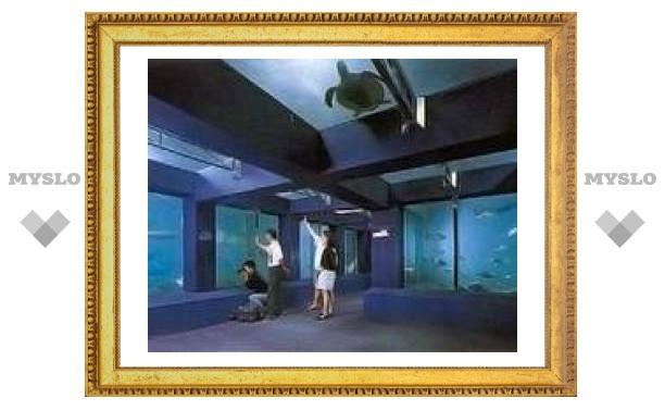 В крупнейшем аквариуме Азии отравились 600 рыб