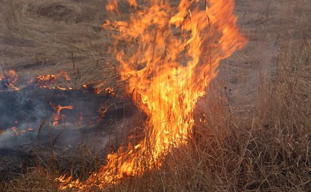 С 7 апреля в лесах Тульской области объявлен пожароопасный сезон
