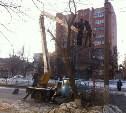 Туляки жалуются на безобразное кронирование деревьев