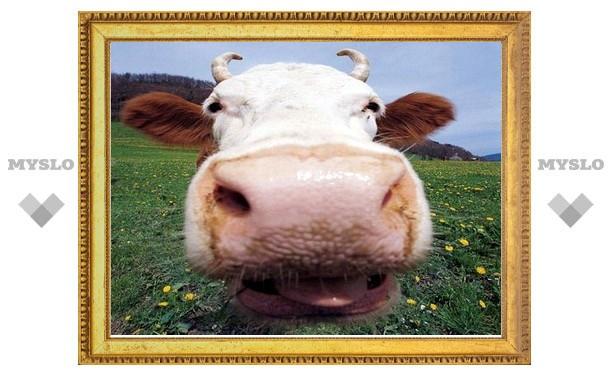 Судебный пристав арестовал у должника корову