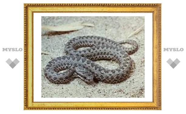 Тулячка пострадала от укуса змеи
