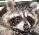 В ТРЦ «Макси» покажут экзотических животных