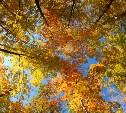 Погода в Туле 12 октября: облачно, сухо и прохладно