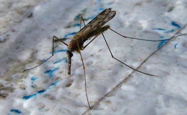 Малярийные комары атакуют туляков!