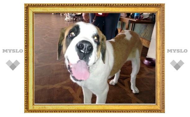 В Туле выберут самых красивых и умных собак