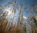 В Тульской области приступили к уборке урожая