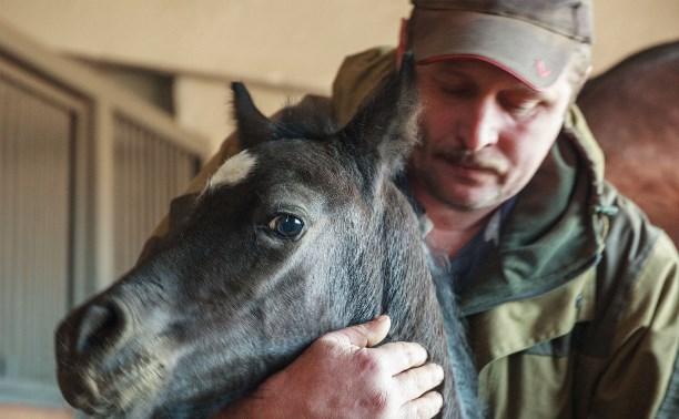 Маленькую лошадку с Куликова поля назвали Звёздочкой