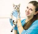 Нужно ли стерилизовать домашнее животное?