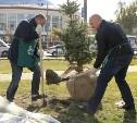 В сквере Глеба Успенского в Туле высадили молодые ели