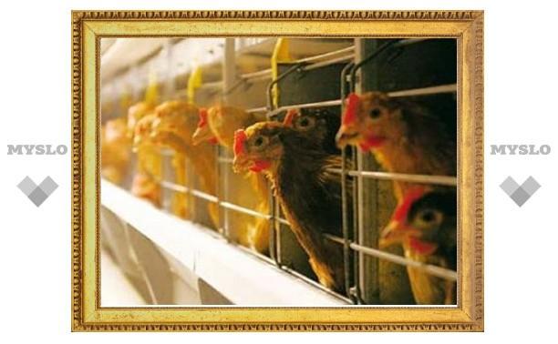 Отходы двух тульских птицеводческих фабрик загрязняли окружающую среду