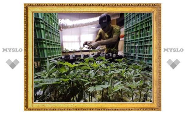 Туляк выращивал дома марихуану