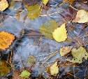 Погода в Туле 1 ноября: сильный ветер, дождь и заморозки