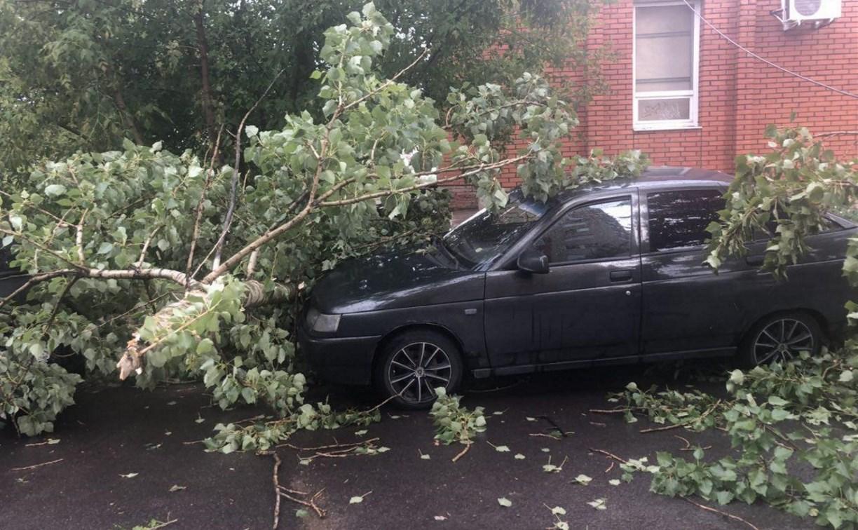 Сильный ветер в Туле повалил 28 деревьев