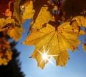 Погода в Туле 18 сентября: прохладно и ветрено