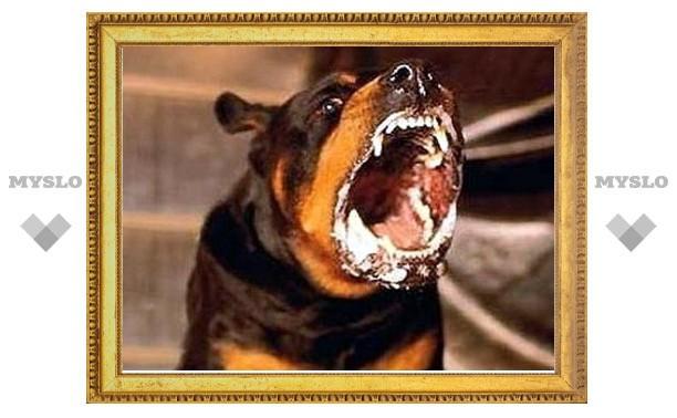 Тулячке компенсируют моральный ущерб за укус собаки