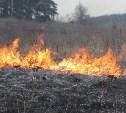Рослесхоз предлагает увеличить штрафы за сжигание травы до 40 тысяч рублей