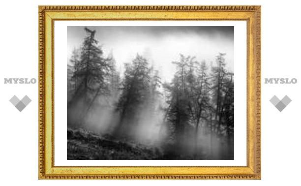 23 ноября: утренний туман - к теплу