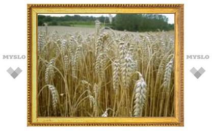 29 мая: Непременно надо сеять жито!