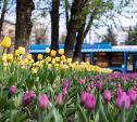 11 мая в Туле ожидается до +18 градусов