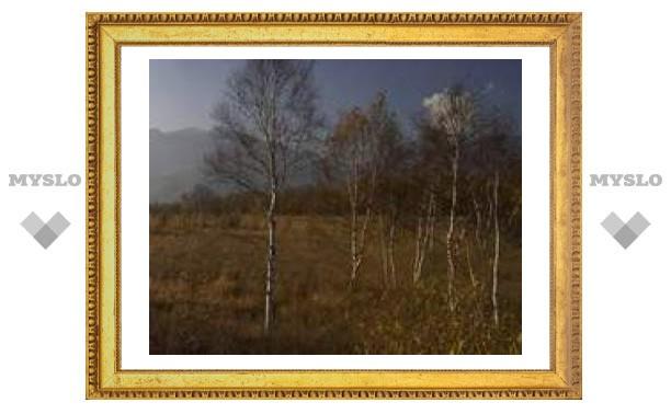 9 ноября: серебряная осень