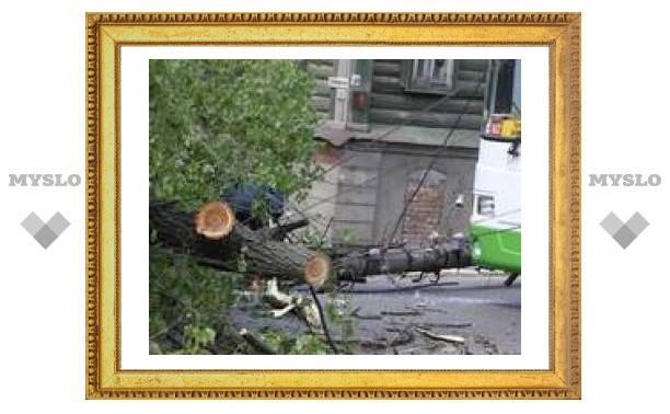 В Туле на проезжую часть рухнуло дерево