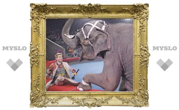 Тулякам раскрыли тайну слоновьего педикюра