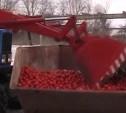 В Туле уничтожили партию заражённых испанских помидоров
