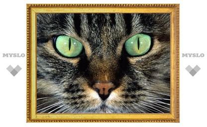 Туляки, поздравьте свою кошку!