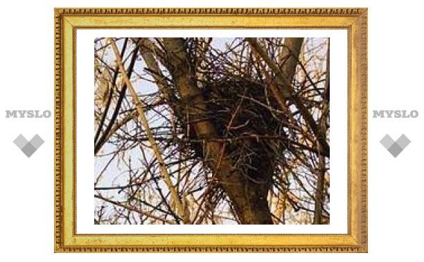 11 марта: Смотри за гнездами