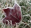 В Туле на неделе ожидаются заморозки