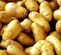 Картошка может подорожать до 27 рублей за килограмм