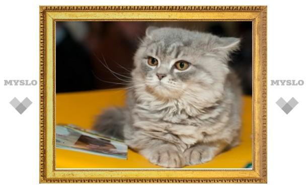 В Туле снова Международная выставка кошек