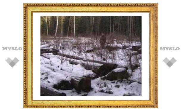 6 ноября: День предотвращения эксплуатации природы во время войны