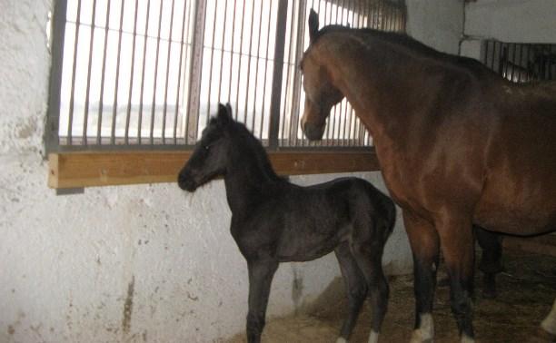 «Куликово поле» объявит конкурс на лучшую кличку новорожденной лошадки
