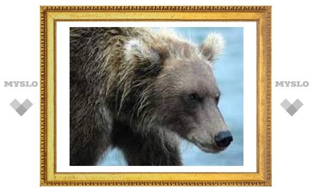 Медведь напал на лагерь туристов в Хабаровском крае