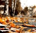 Погода в Туле 10 октября: облачно, без осадков, до 16 градусов тепла