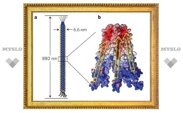 Вирусы превратили в источник энергии