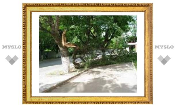 В центре Тулы на тротуар упало дерево