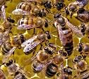 В Туле будут защищать пчёл