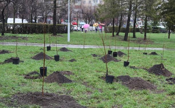 В сквере «Тульское чаепитие» высадили 100 саженцев вишни