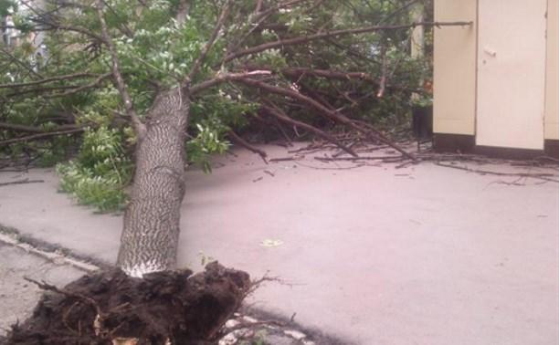 В Туле упавшее напротив детской поликлиники дерево ликвидировали 7 июня