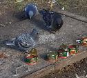 Жители Болохово подкармливают голубей ...красной икрой